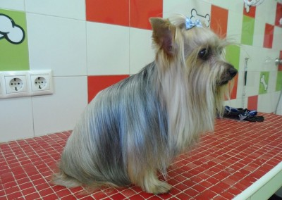 Peluquería Canina Peludos