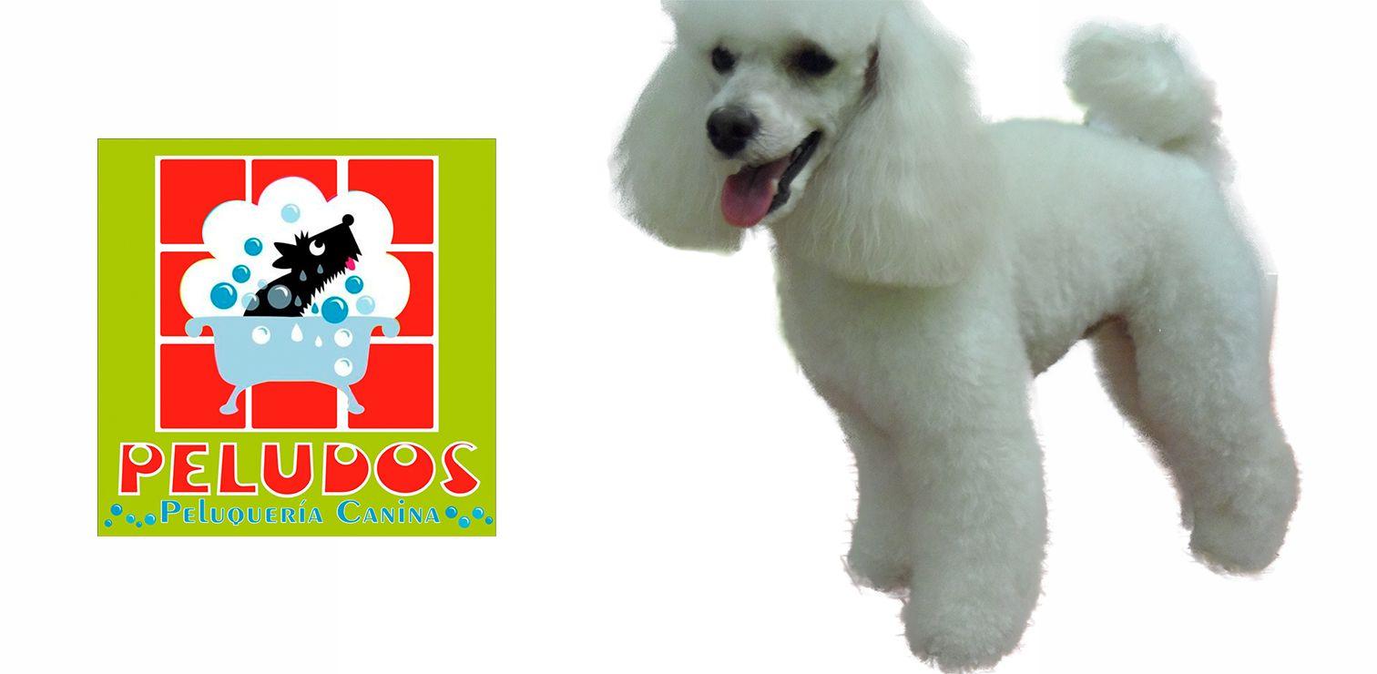 Peluquería Canina Peludos Banner 2