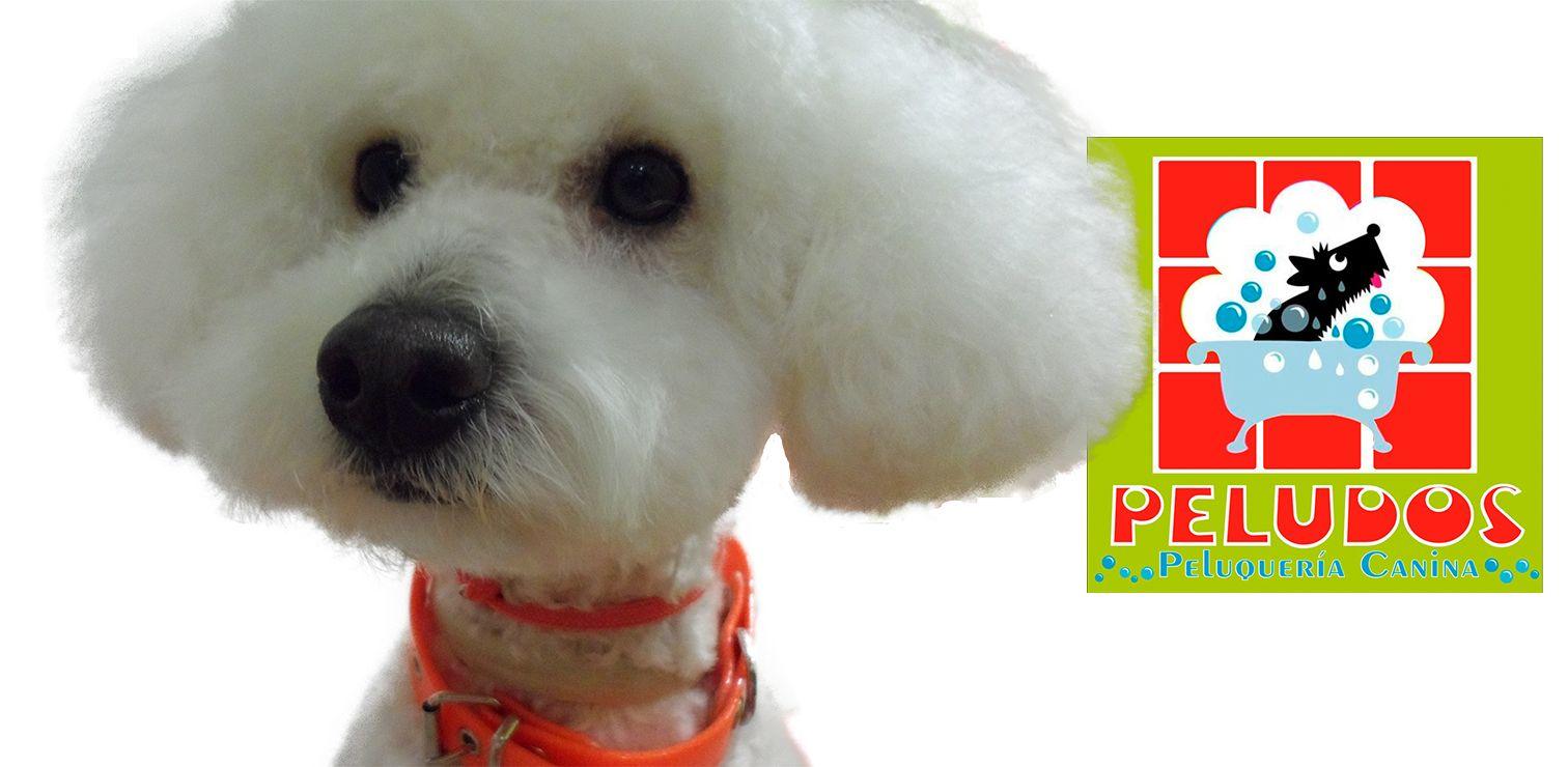Banner Peluquería Canina Peludos 1