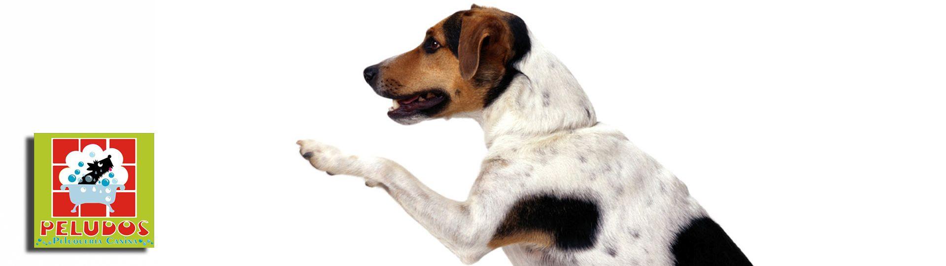 Peluquería Canina Peludos en Córdoba - Aviso Legal